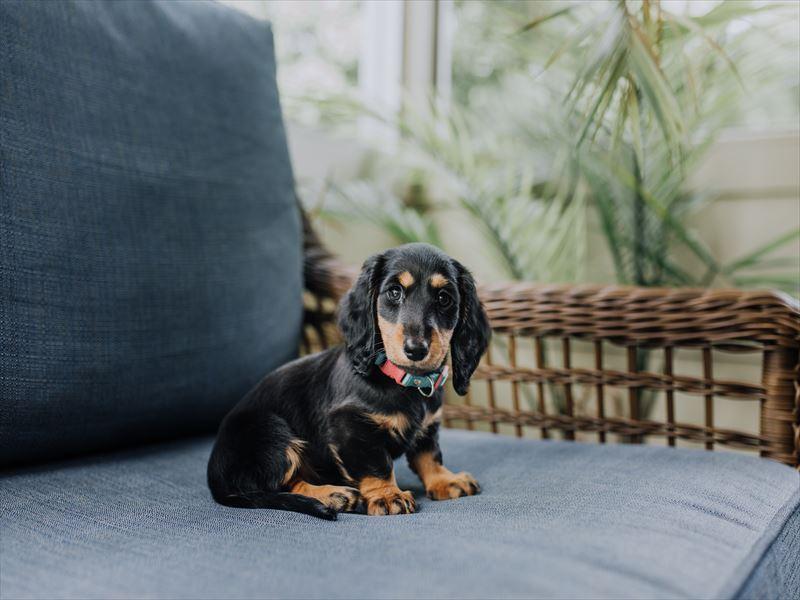 幼犬や高齢犬が抱える慢性的な便秘の解消法