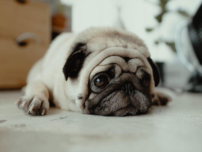 【愛犬家必見】5分でわかる!犬の便秘解消5つのポイント