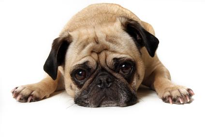 犬の便秘の原因は5種類。愛犬の便秘の原因をすばやく判断することが大切