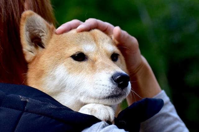 犬の便秘解消に天然オリゴ糖-犬の便秘解消に自らの経験からにカイテキオリゴが最適とたどり着いた理由